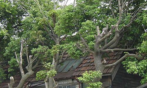 アトリエ北側屋根.jpg
